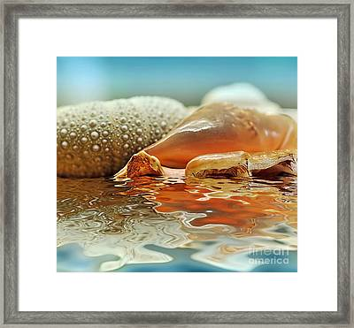 Seashell Reflections On Water Framed Print by Kaye Menner