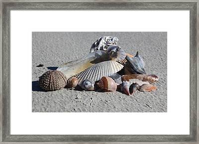 Seashell Treasures Framed Print by Rosanne Jordan