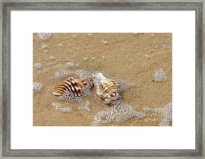 Seashells And Bubbles 2 Framed Print by Kaye Menner