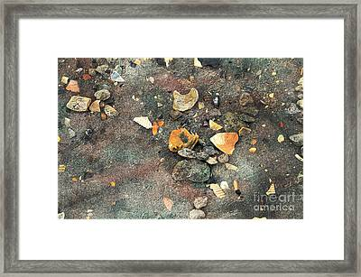 Seashells And Stones Framed Print by Kathleen Struckle
