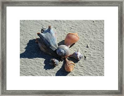 Seashells Art Framed Print by Rosanne Jordan