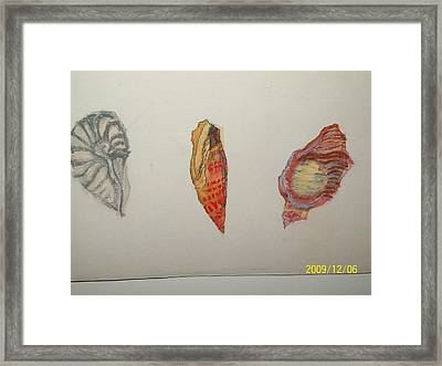Seashells By The Seashore Framed Print by Nancy Caccioppo