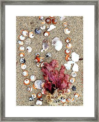 Seashells By The Seashore Framed Print by Wingsdomain Art and Photography