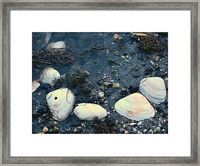 Seashells By The Water Framed Print