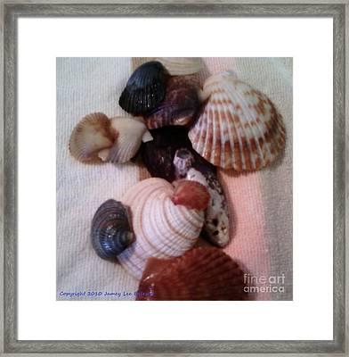Seashells Framed Print by Jamey Balester