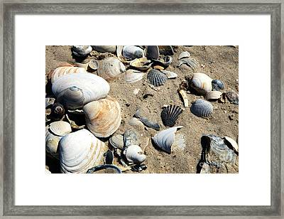 Framed Print featuring the photograph Seashells by John Rizzuto