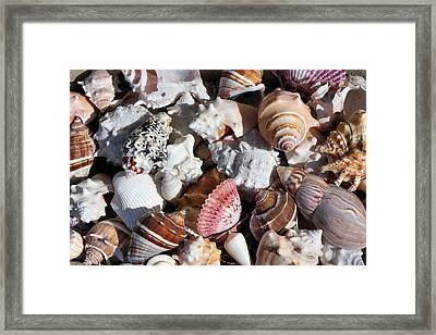 Seashells Framed Print by Kristin Elmquist