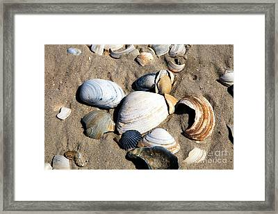 Framed Print featuring the photograph Seashells On The Beach by John Rizzuto