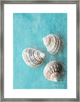 Seashells On Turquoise Framed Print by Carol Groenen