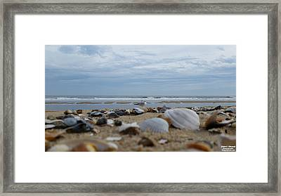 Seashells Seagull Seashore Framed Print