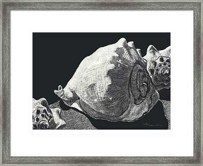 Seashells She Sells Framed Print by Diane Cutter