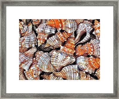 Seashells. Texture. Framed Print