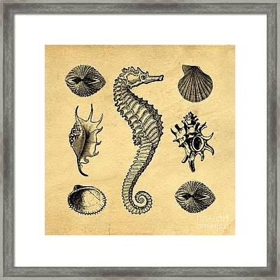Seashells Vintage Framed Print by Edward Fielding
