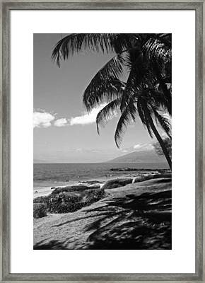 Seashore Palm Trees Framed Print