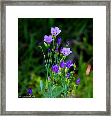Framed Print featuring the photograph Seaside Gentian Wildflower  by Barbara Bowen