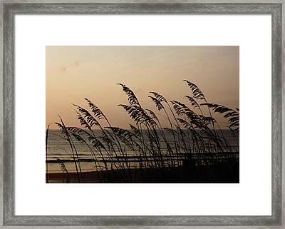 Seaside Guardians Framed Print by JAMART Photography
