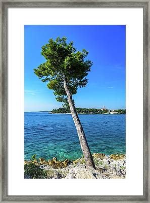 Seaside Leaning Tree In Rovinj, Croatia Framed Print