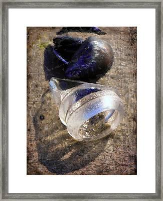 Seaside Objects Framed Print by Lola Bronzini