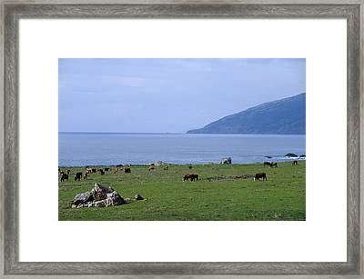 Seaside Pasture Framed Print