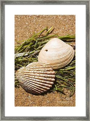Seaside Seashells Framed Print by Jorgo Photography - Wall Art Gallery