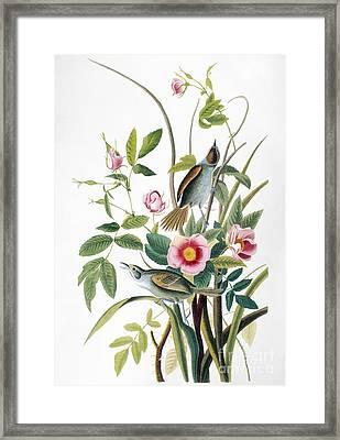 Seaside Sparrow, 1858 Framed Print by Granger