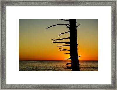 Seaside Tree Branch Sunset 2 Framed Print