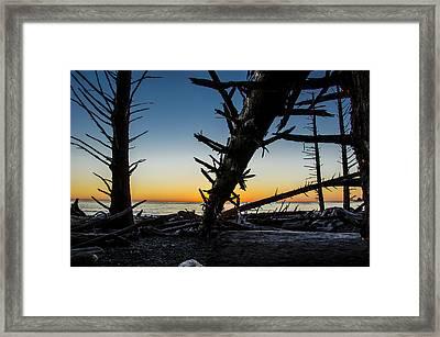 Seaside Tree Branch Sunset 3 Framed Print