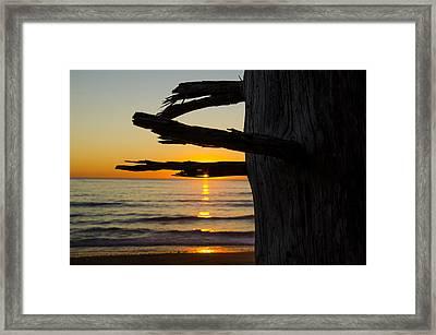 Seaside Tree Branch Sunset Framed Print