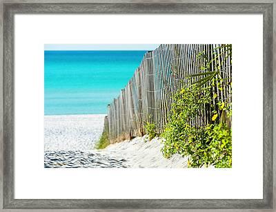 Seaside Wildflower Sand Fence Framed Print