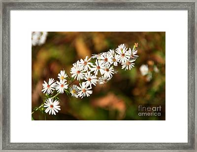 Season Delights Framed Print