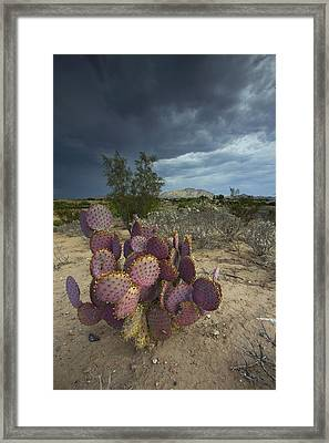 Season Of The Storm Framed Print by Sue Cullumber