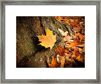 Seasonal Beauty  Framed Print