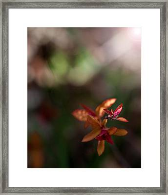 Framed Print featuring the photograph Seasons Beginning by Cherie Duran