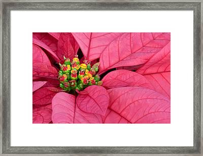 Season's Greetings Framed Print by Margaret Barry