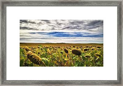 Seasons In The Sun Framed Print