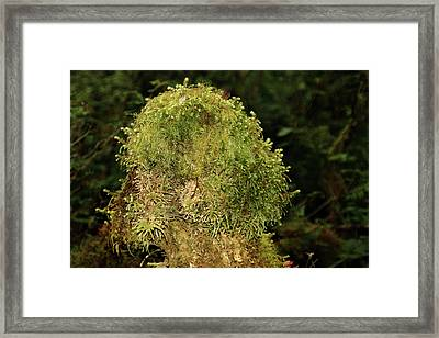 Seasons Of Magic - Hoh Rainforest Olympic National Park Wa Framed Print by Christine Till