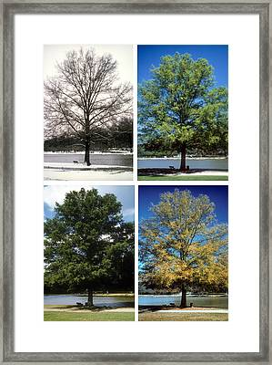 Seasons Of Time Framed Print by Gerard Fritz