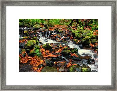 Seasons Scattered Framed Print