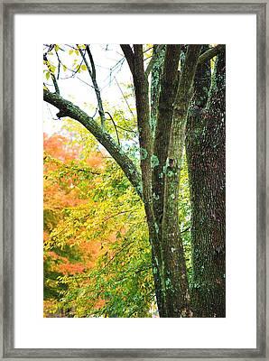 Seasons Framed Print by Trudi Southerland