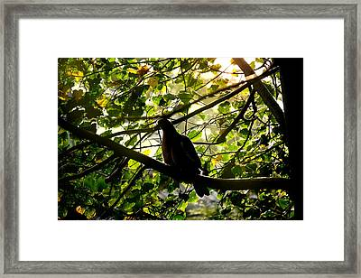 Framed Print featuring the photograph Seasons Will Change by Bernd Hau