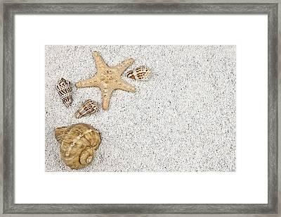 Seastar And Shells Framed Print by Joana Kruse
