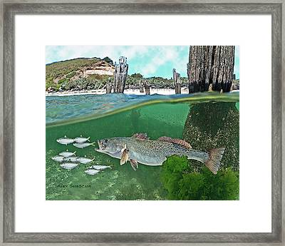 Seatrout Attack Framed Print
