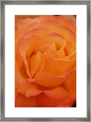 Seattle Rose Framed Print