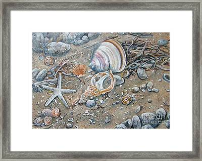 Seaweed And Shells Framed Print by Val Stokes