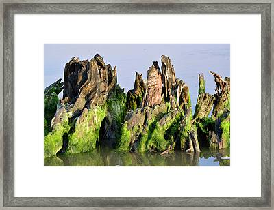 Seaweed-covered Beach Stump Framed Print by Bruce Gourley