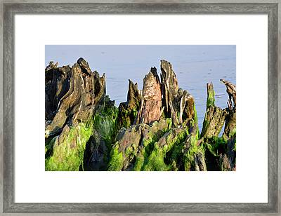 Seaweed-covered Beach Stump Mountain Range Framed Print by Bruce Gourley