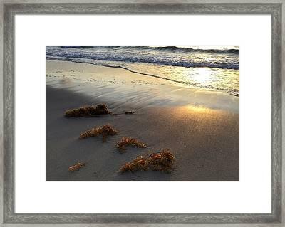 Seaweed Glow Framed Print