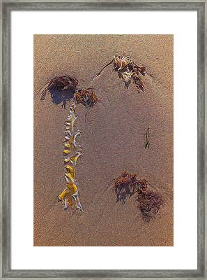 Seaweed On Clayhead Beach Framed Print