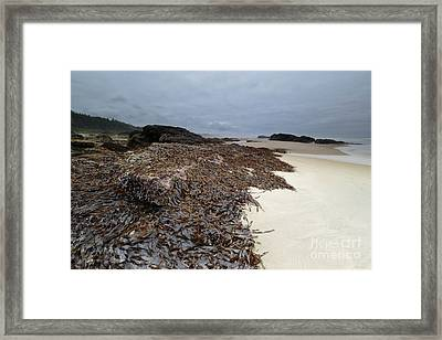 Seaweed On The Beach Framed Print