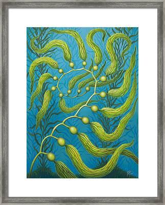 Seaweed Spiral Framed Print
